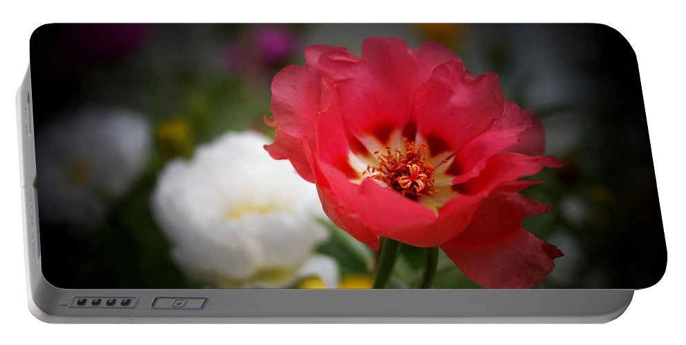 Moss Rose Portable Battery Charger featuring the photograph Moss Roses by Susan McMenamin