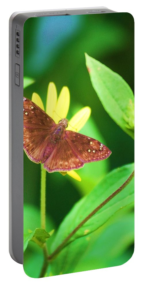 Moth Portable Battery Charger featuring the photograph Moth On Yellow by Chuck Hicks