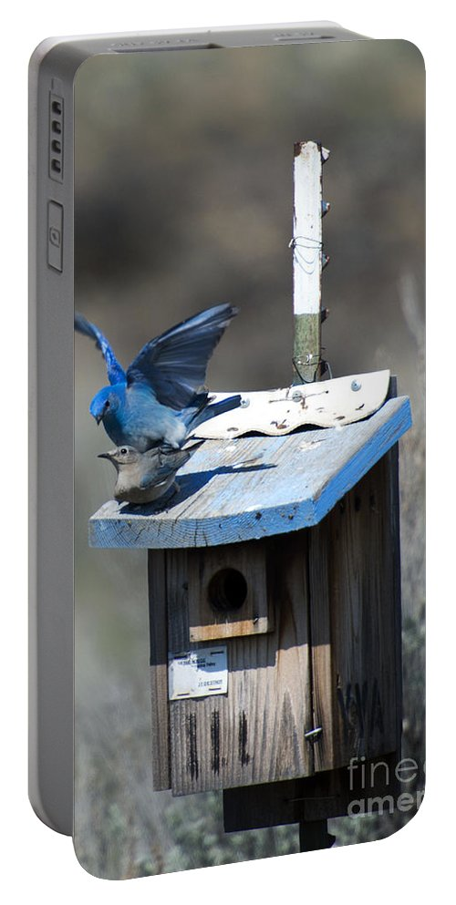 Mountain Bluebirds Portable Battery Charger featuring the photograph Mountain Bluebirds Mating by Mike Dawson