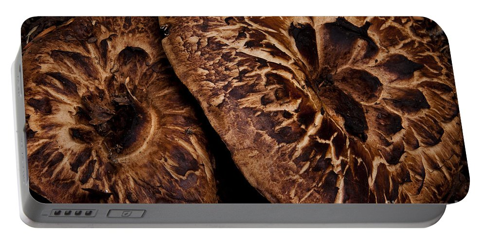 Mountain Mushrooms Portable Battery Charger featuring the photograph Mountain Mushrooms  #3670 by J L Woody Wooden