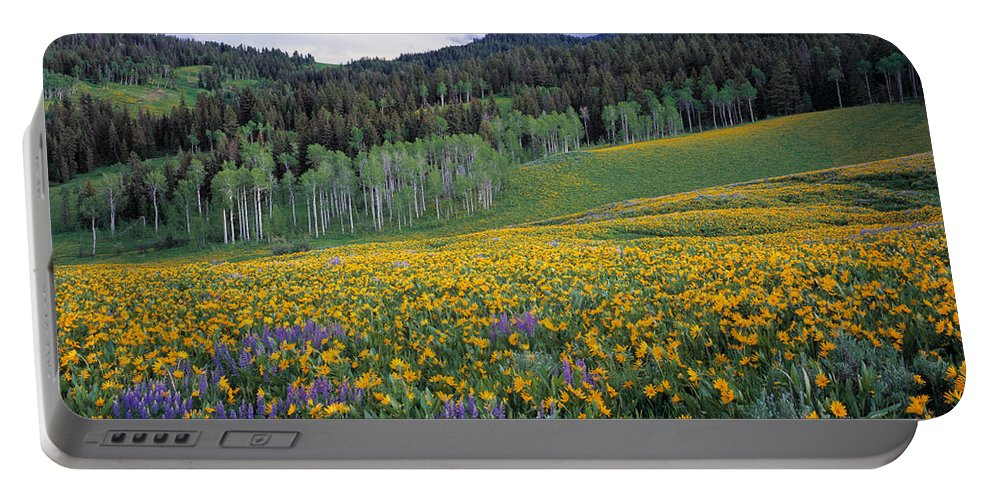 Spring Flowers Portable Battery Charger featuring the photograph Mountain Spring by Leland D Howard