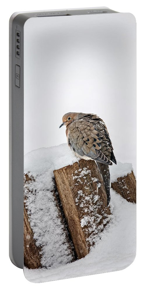 Animal Portable Battery Charger featuring the photograph Mourning Dove In Snow by Leslie Banks