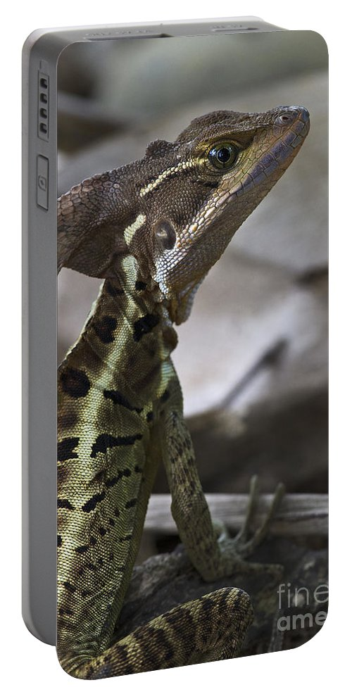 Nina Stavlund Portable Battery Charger featuring the photograph Mr. Basilisk.. by Nina Stavlund