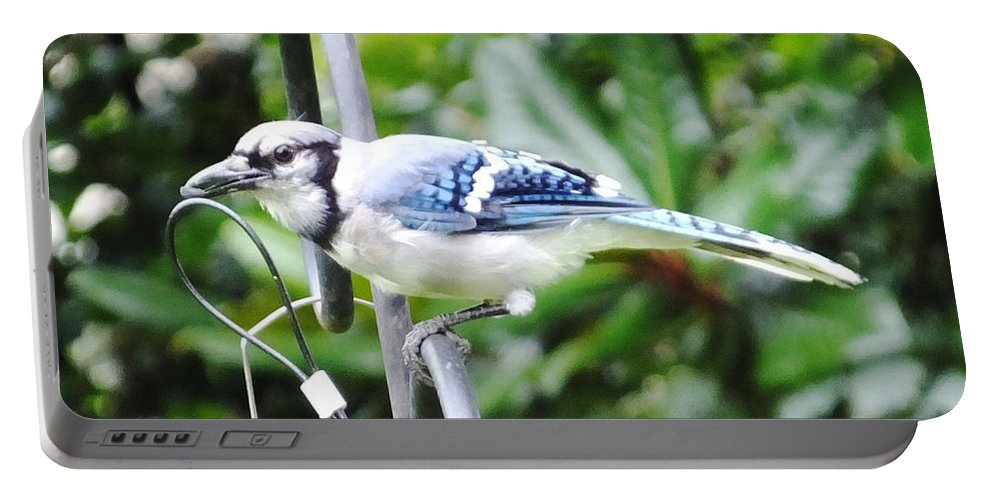 Blue Jay Portable Battery Charger featuring the photograph Mr Jay by Lizi Beard-Ward