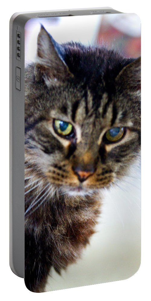 Cat Portable Battery Charger featuring the photograph Mr. Lynx - Tabby - Cat by Marie Jamieson