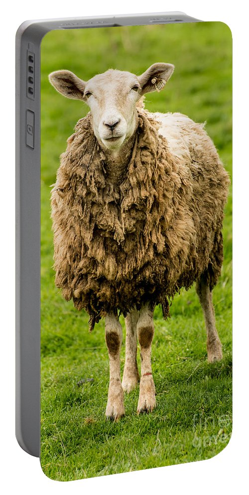 Willamette Valley Portable Battery Charger featuring the photograph Mt Angel Abbey Sheep - Oregon by Gary Whitton