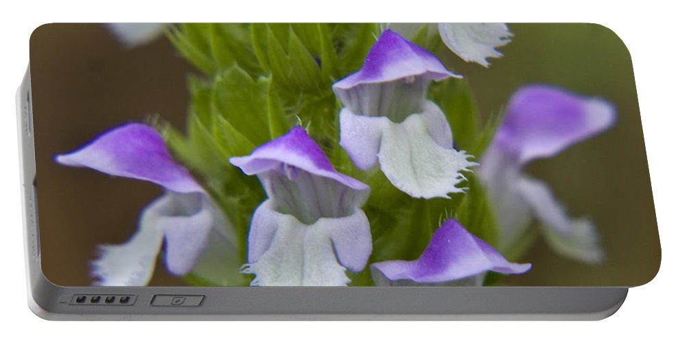 Flowers Portable Battery Charger featuring the photograph Multi-purple Flowers by Darleen Stry