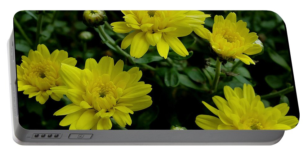 Mums Portable Battery Charger featuring the photograph Mums The Word by James C Thomas