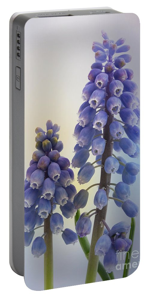 Muscari Portable Battery Charger featuring the photograph Muscari by Ann Garrett