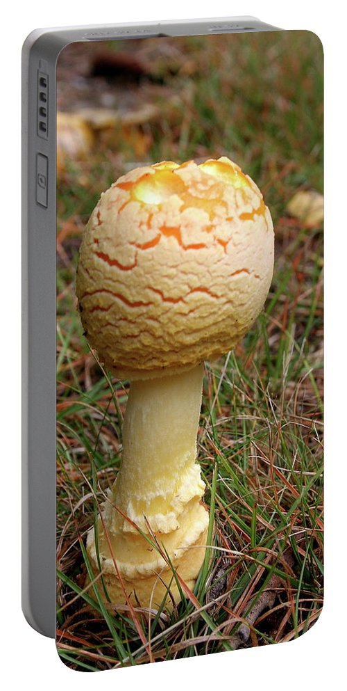 Mushroom Portable Battery Charger featuring the photograph Mushroom by Christiane Schulze Art And Photography