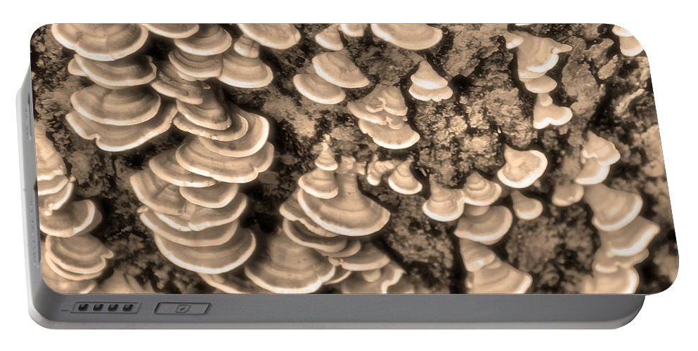 Mushrooms On A Tree Portable Battery Charger featuring the photograph Mushrooms On A Tree by Dan Sproul