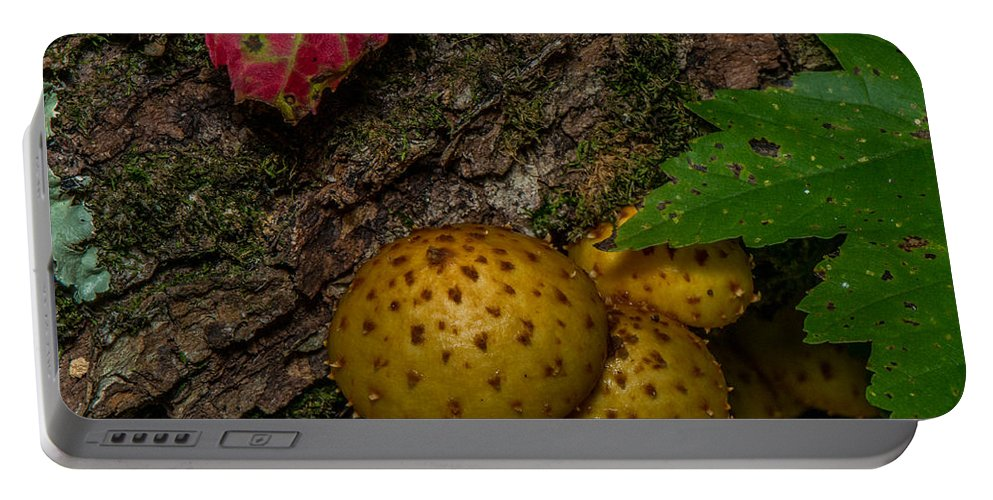 Mushroom Portable Battery Charger featuring the photograph Mushrooms On The Forest Floor by Paul Freidlund