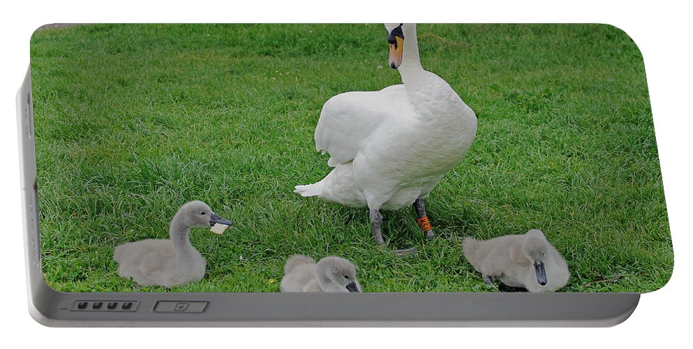 Birds Portable Battery Charger featuring the photograph Mute Swan With Cygnets by Tony Murtagh