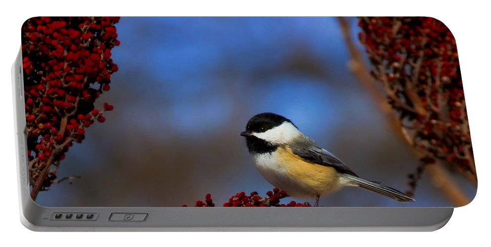 Bird Portable Battery Charger featuring the photograph My Little Chicadee by John Absher