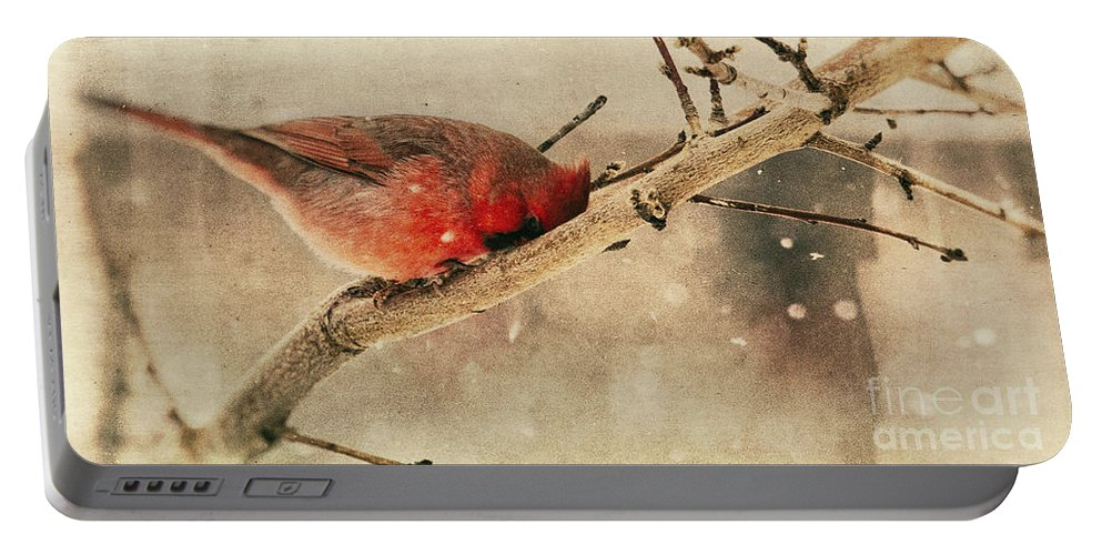 Cardinal Portable Battery Charger featuring the photograph My Nose Is Cold by Pam Holdsworth