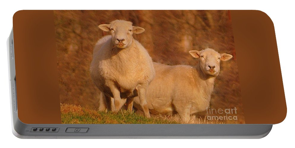Sheep Portable Battery Charger featuring the photograph My Sheep ...  by Lydia Holly