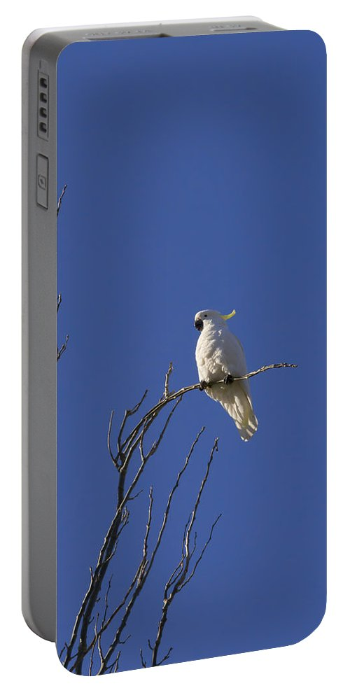 Birds Portable Battery Charger featuring the photograph My Sulphur Crested Cockatoo Visiting by Anthony Davey