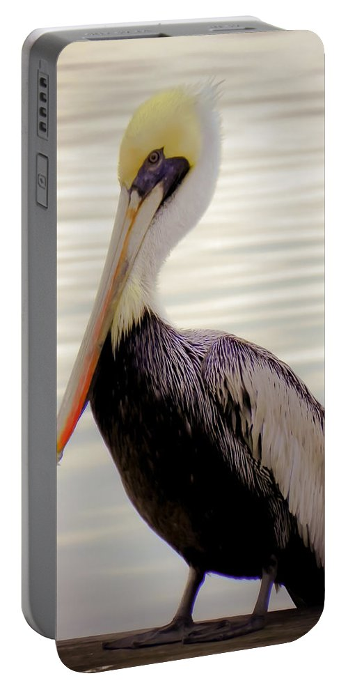 Bird Portable Battery Charger featuring the photograph My Visitor by Karen Wiles