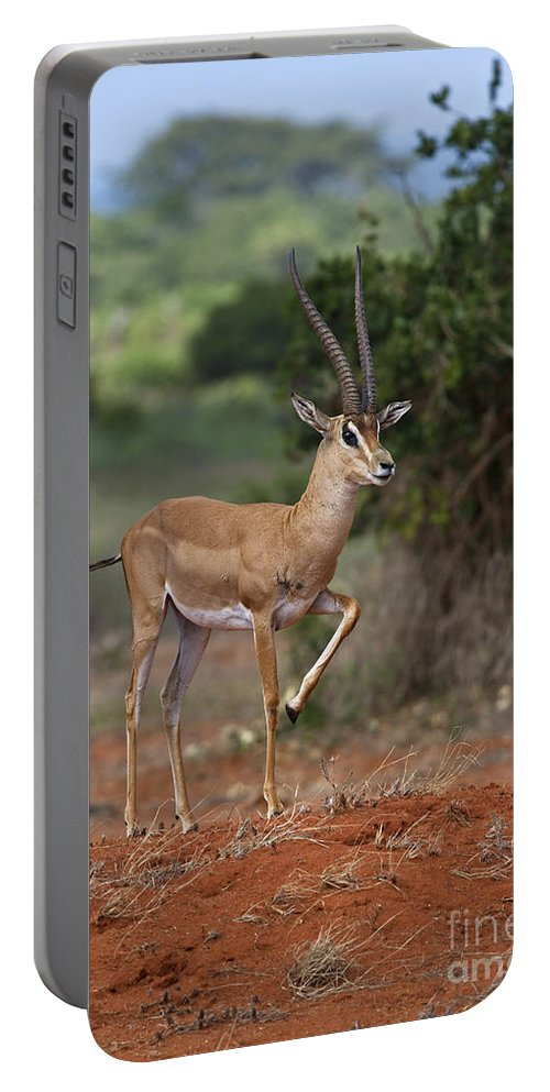 Festblues Portable Battery Charger featuring the photograph Nanger Granti... by Nina Stavlund