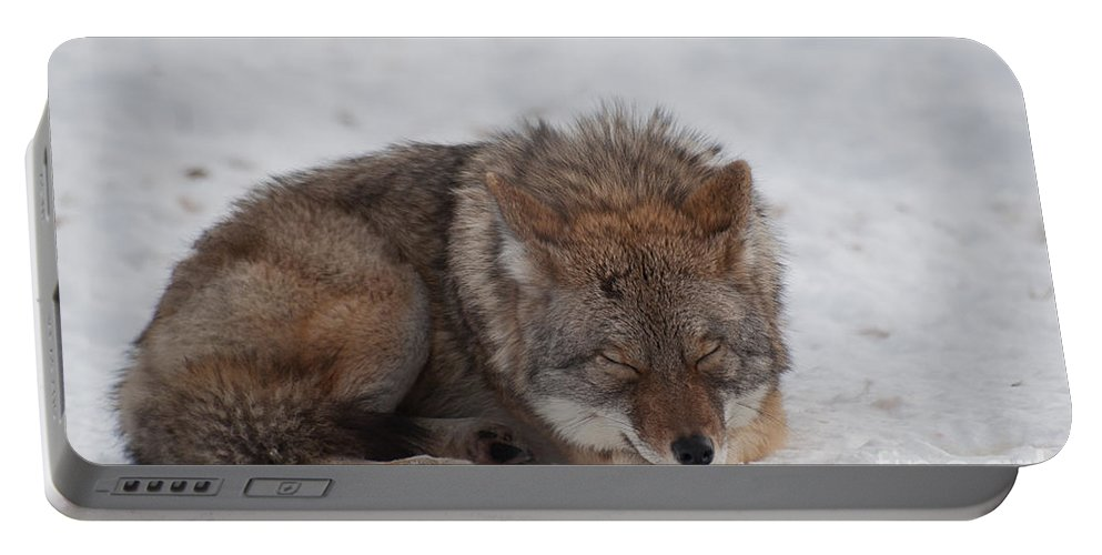 Coyote Portable Battery Charger featuring the photograph Nap Time by Bianca Nadeau