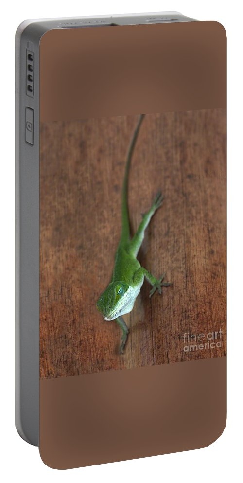 Lizard Photography Portable Battery Charger featuring the photograph Nap Time by Patricia Griffin Brett