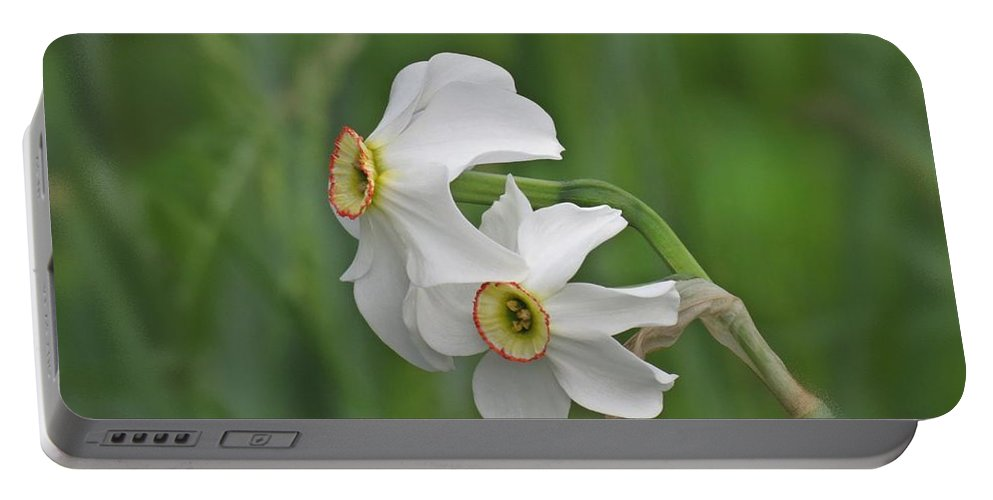 Narcissus Portable Battery Charger featuring the photograph Narcissus Pair by MTBobbins Photography