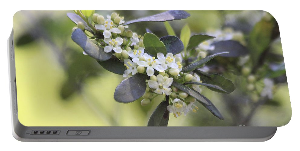 Flower Portable Battery Charger featuring the photograph Nature Path Flower by Deborah Benoit