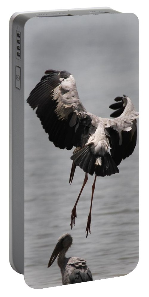 Openbill Stork Portable Battery Charger featuring the photograph Need Some Space To Land by Ramabhadran Thirupattur
