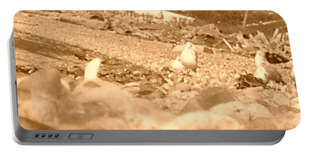 Seagulls Portable Battery Charger featuring the photograph Neighborhood 6 by Marcello Cicchini