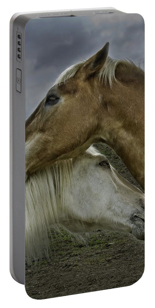 Horses Portable Battery Charger featuring the photograph Neighbors by Eleanor Bortnick
