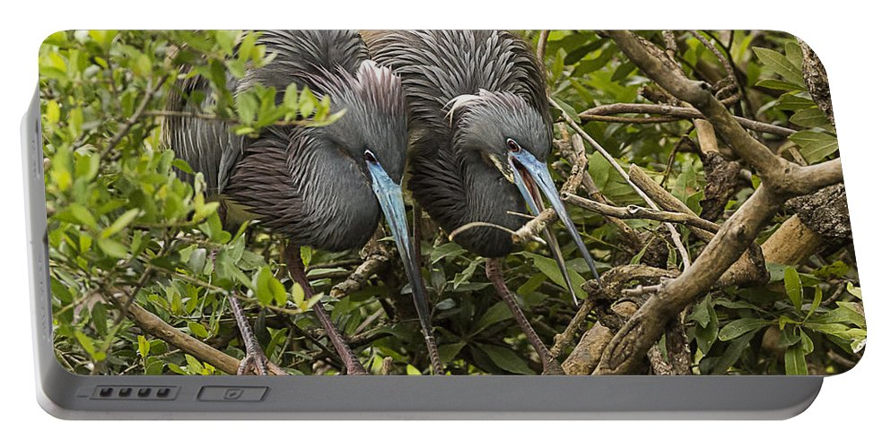 Little Blue Herons Portable Battery Charger featuring the photograph Nest Building by Priscilla Burgers