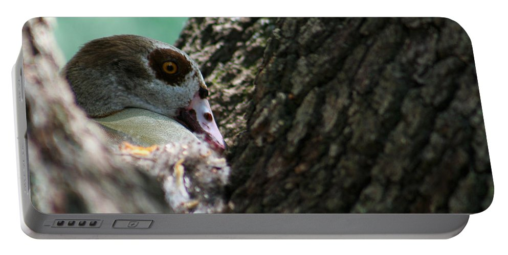 Goose Portable Battery Charger featuring the photograph Nesting by Allan Lovell