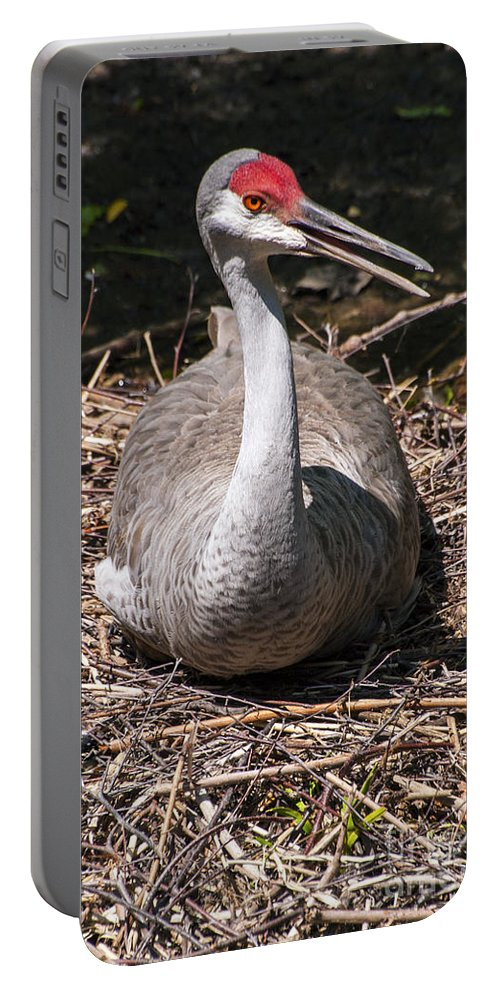 Queens Zoo New York Crane Cranes Bird Birds Animal Animals Zoos Creature Creatures Portable Battery Charger featuring the photograph Nesting by Bob Phillips