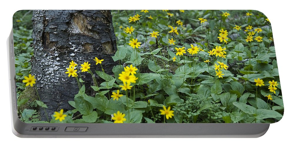 Landscapes Portable Battery Charger featuring the photograph New Beginnings by Wildlife Fine Art