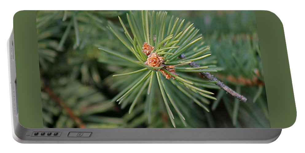 Trees Portable Battery Charger featuring the photograph New Blue Spruce Buds by Wayne Williams