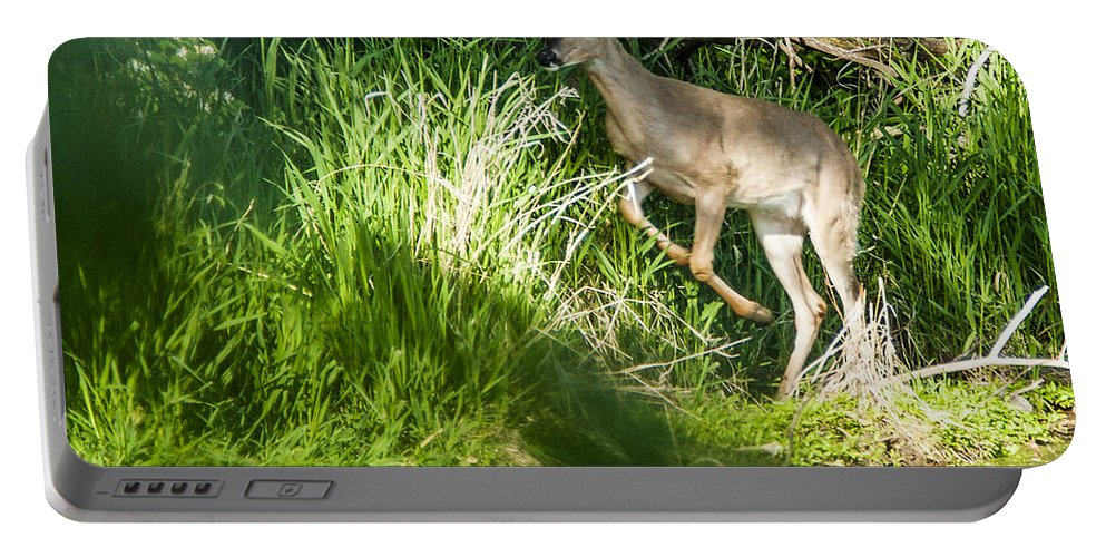 Spring Portable Battery Charger featuring the photograph New Buck by Edward Peterson