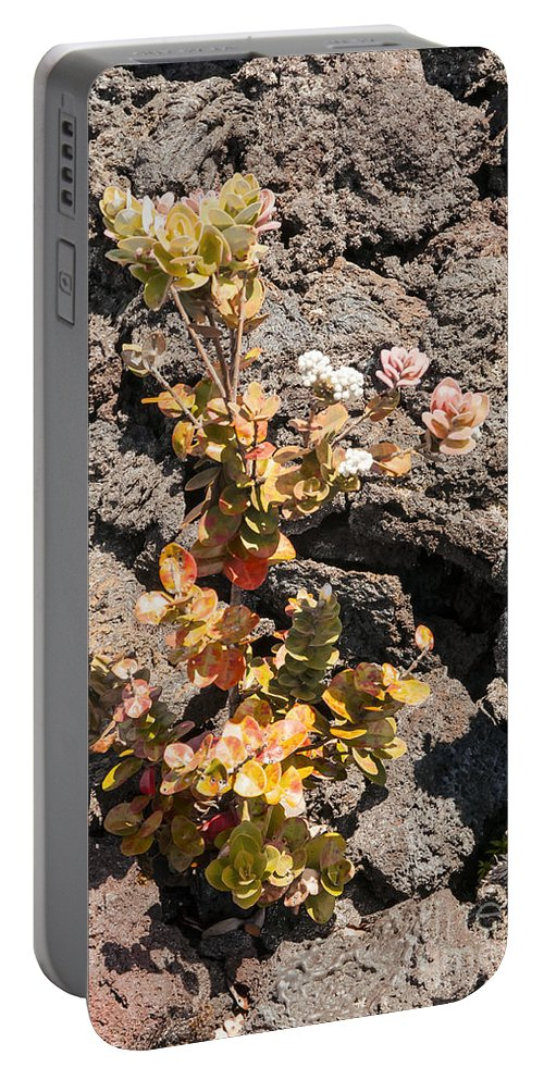 Devastation Trail Leaf Leaves Flower Flowers Bloom Blooms Blossom Blossoms Nature Hawaii Volcano National Park Big Island Parks Foliage Plant Plants Portable Battery Charger featuring the photograph New Life by Bob Phillips