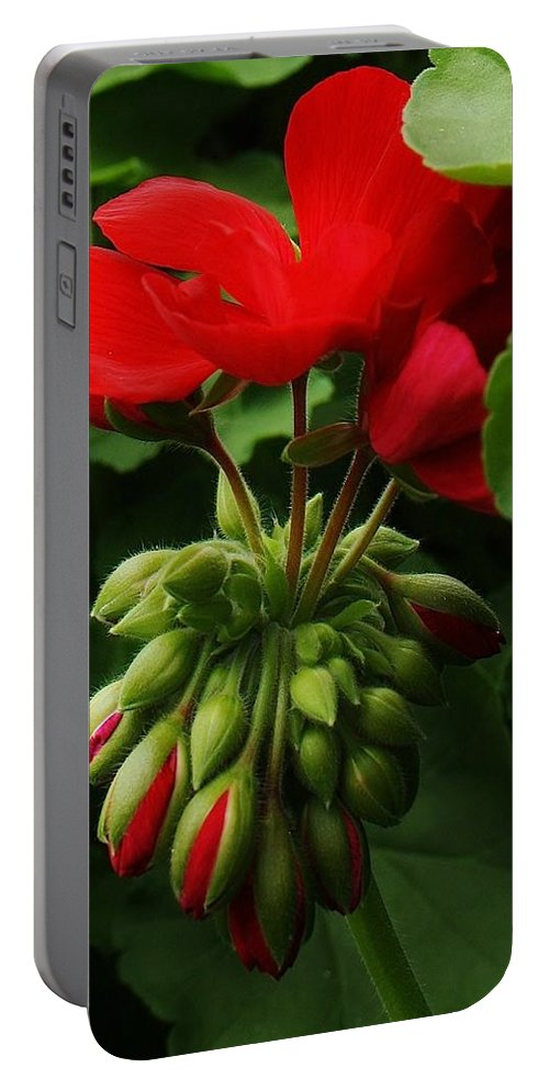 Flora Portable Battery Charger featuring the photograph New Life by Bruce Bley