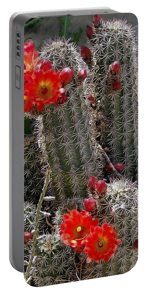 Cactus Portable Battery Charger featuring the photograph New Mexico Cactus by Kurt Van Wagner