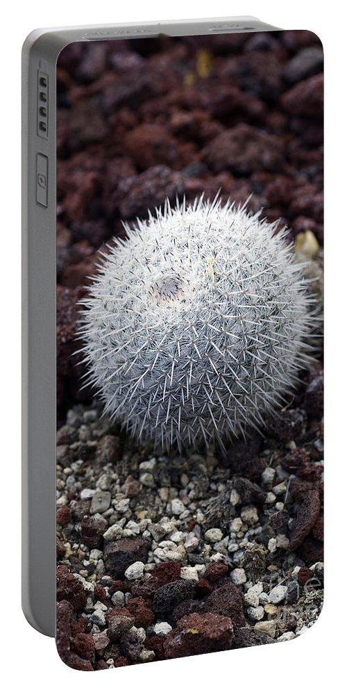 Close Up Portable Battery Charger featuring the photograph New Photographic Art Print For Sale White Ball Cactus by Toula Mavridou-Messer