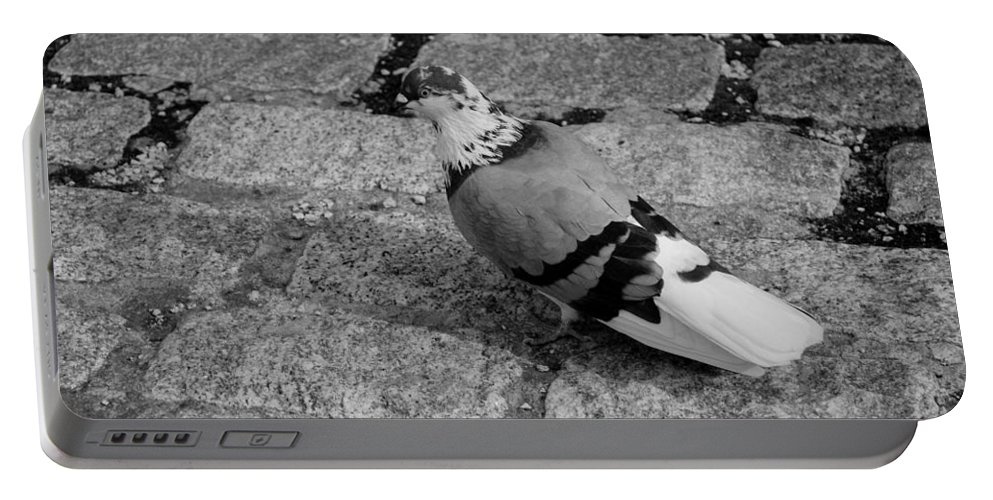 Macro Portable Battery Charger featuring the photograph New York City Pigeon In Black And White by Rob Hans