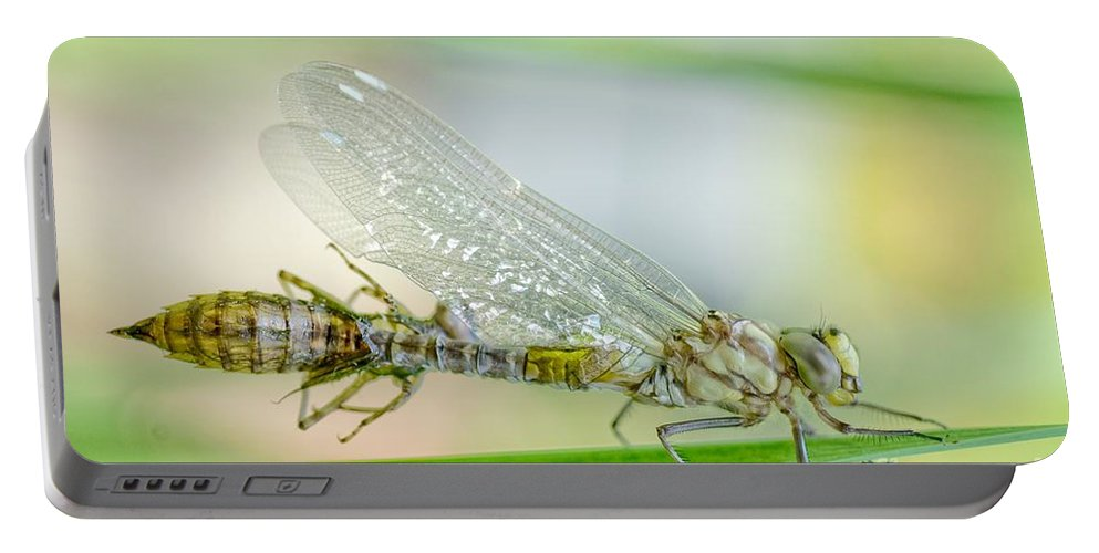 Animal Portable Battery Charger featuring the photograph Newborn Blue Hawker Dragonfly by Martin Capek