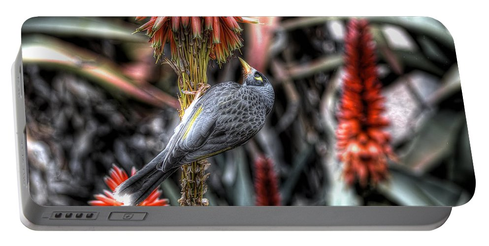 Bird Portable Battery Charger featuring the photograph Noisy Miner by Wayne Sherriff