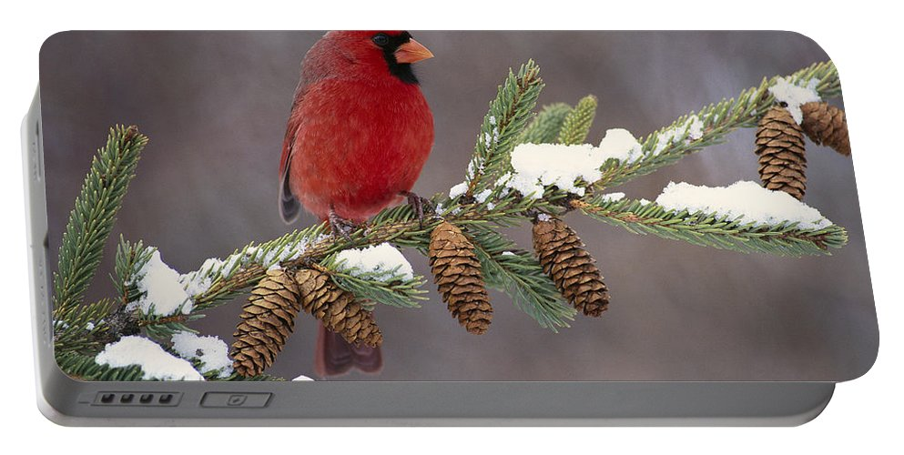 00447547 Portable Battery Charger featuring the photograph Cardinal and Pine Cones by Steve Gettle