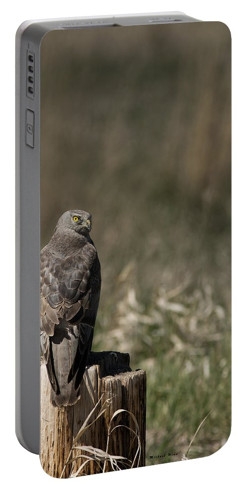 Harrier Portable Battery Charger featuring the photograph Northern Harrier At Rest by Michael Winn