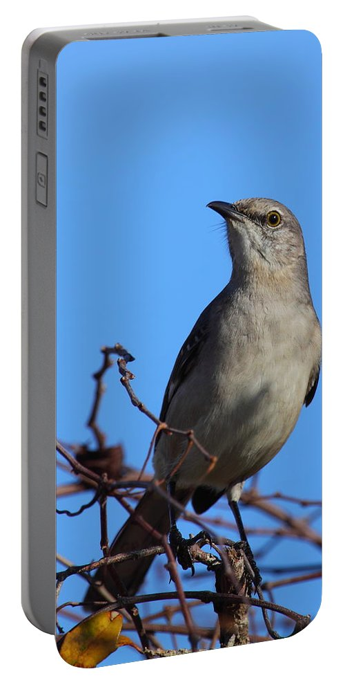 Mockingbird Portable Battery Charger featuring the photograph Northern Mockingbird IIi by Bruce J Robinson