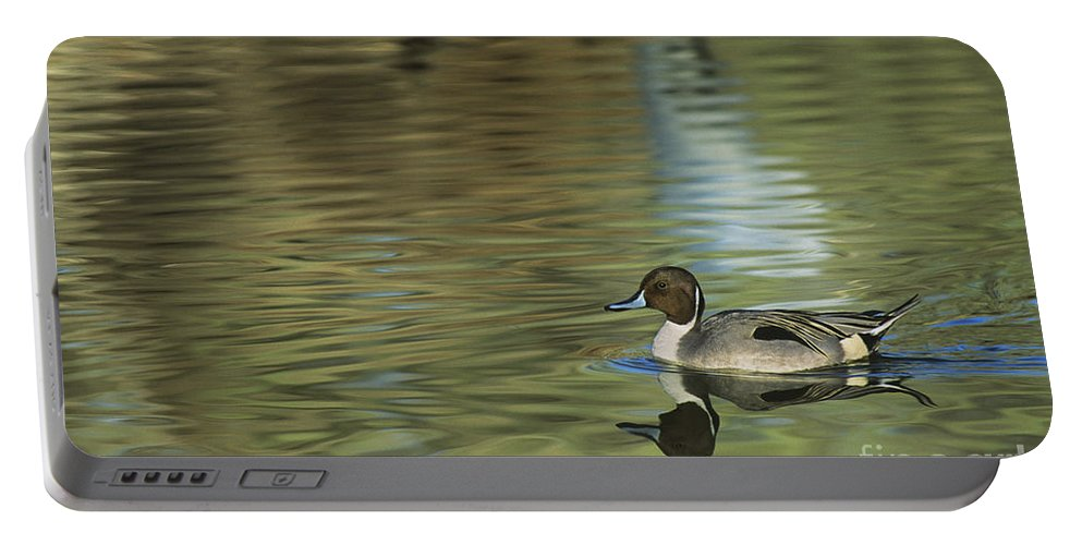 North America Portable Battery Charger featuring the photograph Northern Pintail In A Quiet Pond California Wildlife by Dave Welling
