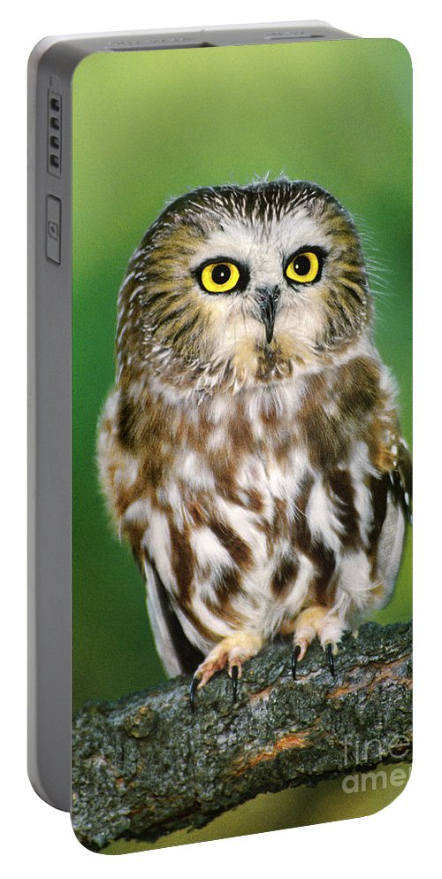 Dave Welling Portable Battery Charger featuring the photograph Northern Saw-whet Owl Aegolius Acadicus Wildlife Rescue by Dave Welling