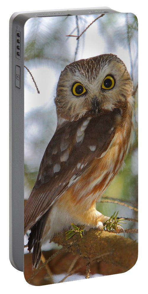 Owl Portable Battery Charger featuring the photograph Northern Saw-whet Owl by Bruce J Robinson