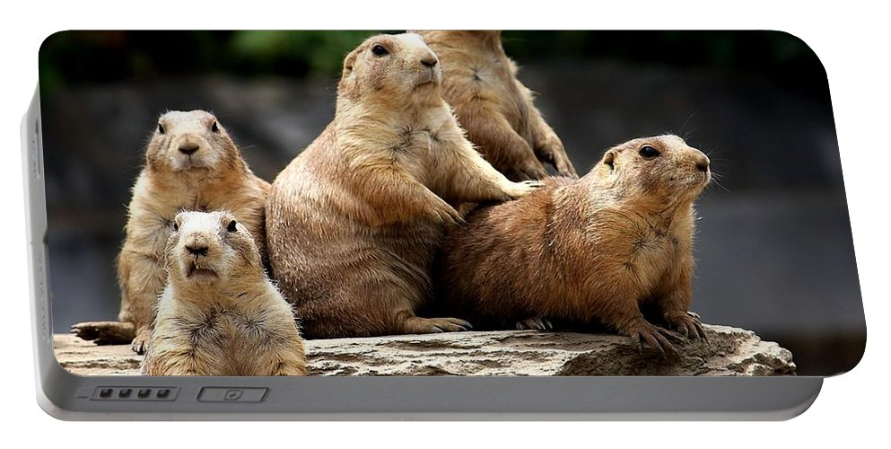 Prairie Dogs Portable Battery Charger featuring the photograph Nosey Bodies by Joyce Baldassarre